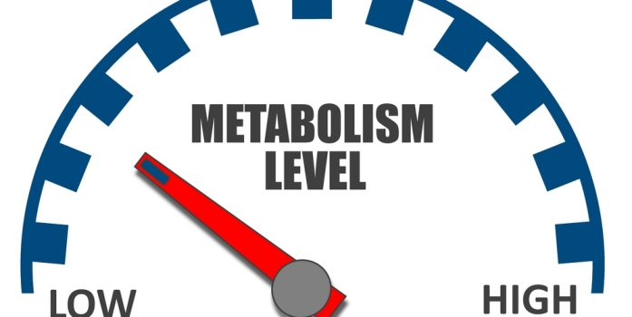 What is Metabolic Damage?
